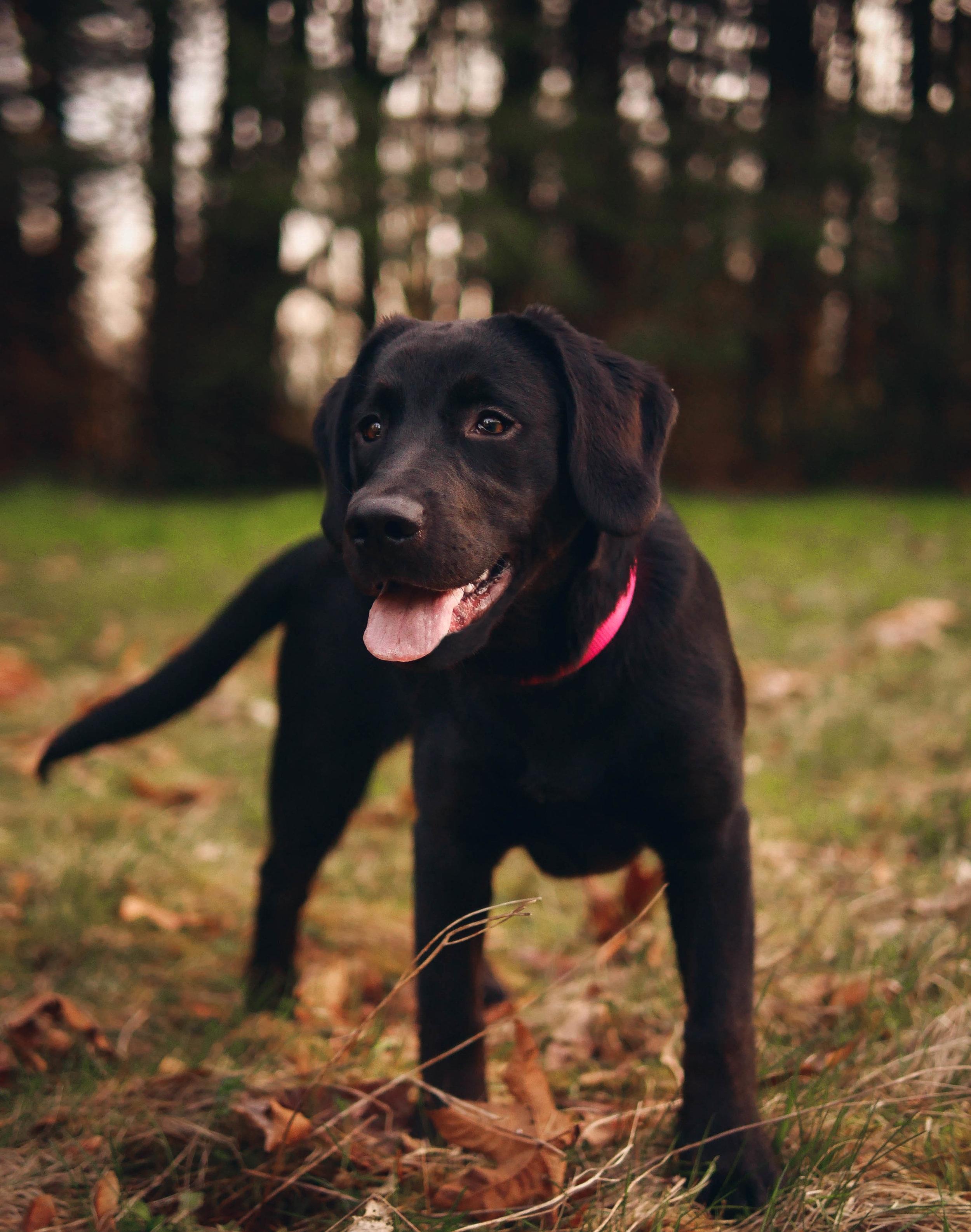 Fall Pet Photography