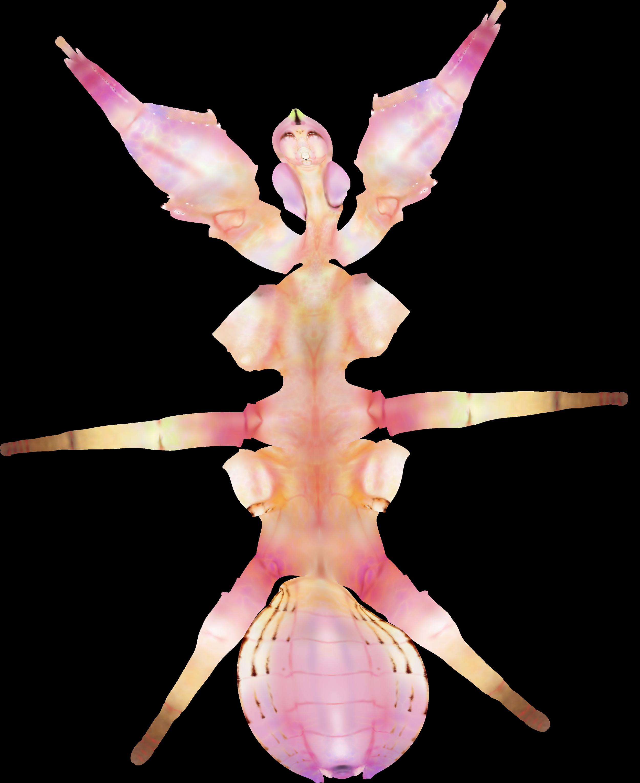 MSC2003Y_MantisSculpt_D_UVs.png