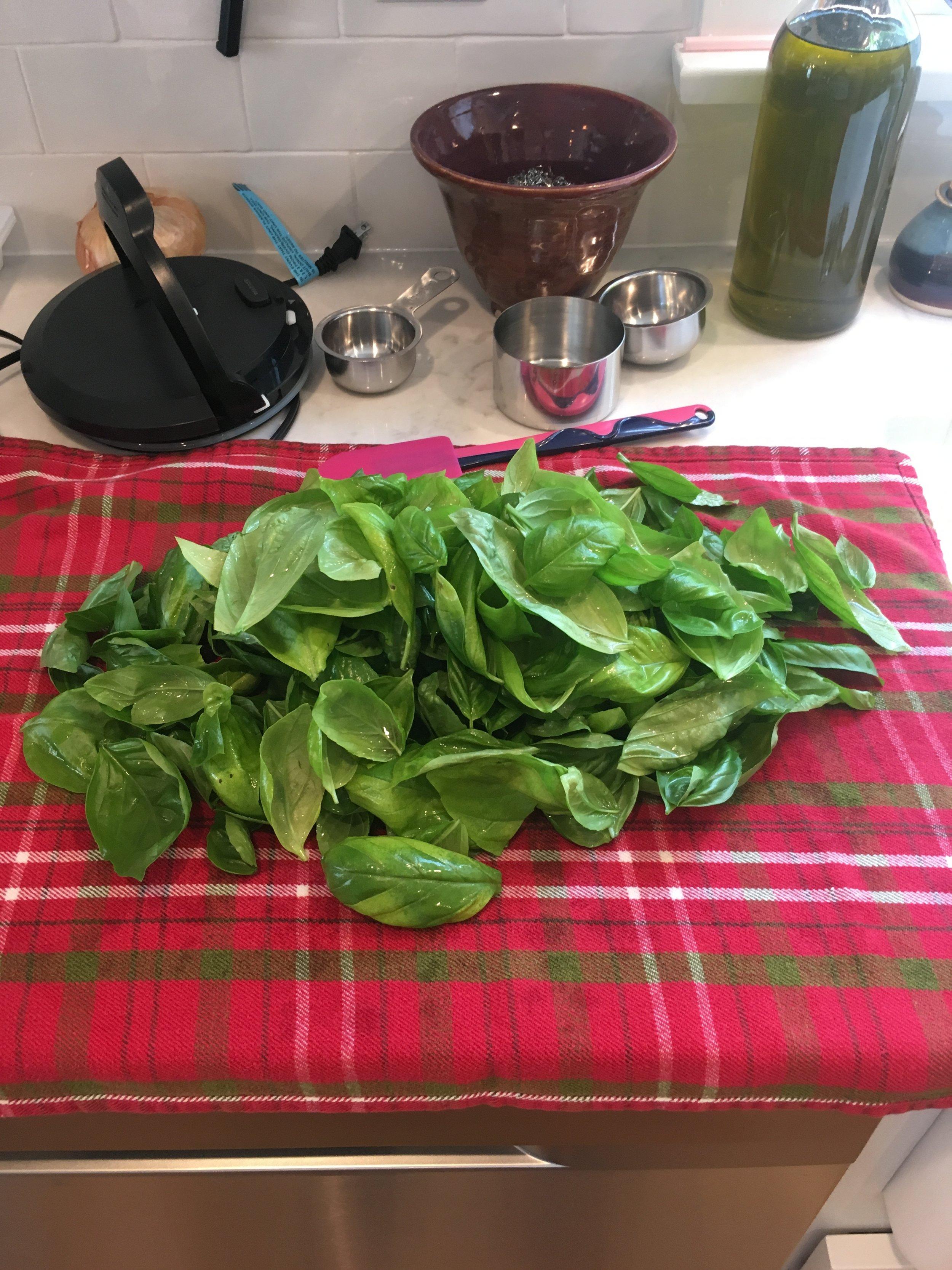 2 Washed Basil Leaves.JPG