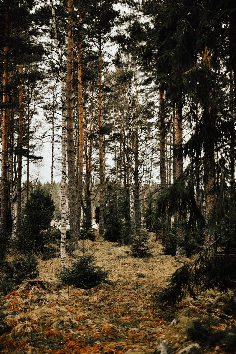 Linnsejphotography-brollopsfotograf-halmstad-vasteras-halland-brollop-brollopsinspo-brudklanning-brollopsfotografering-0033.jpg