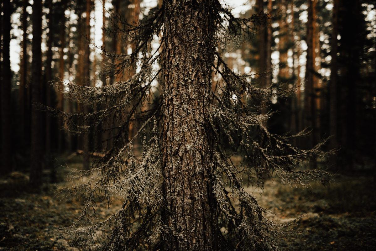 Linnsejphotography-brollopsfotograf-halmstad-vasteras-halland-brollop-brollopsinspo-brudklanning-brollopsfotografering-bohowedding-bohemiskt-lantligt-brollop-0067.jpg