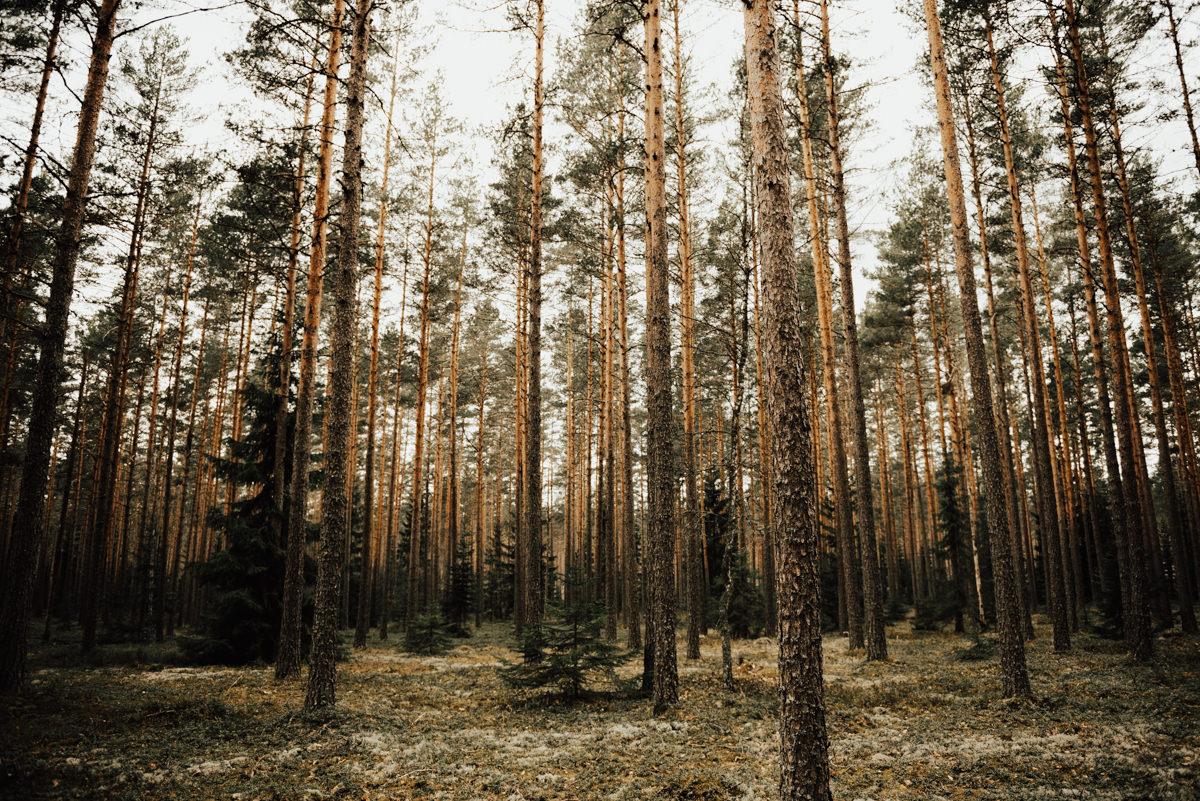 Linnsejphotography-brollopsfotograf-halmstad-vasteras-halland-brollop-brollopsinspo-brudklanning-brollopsfotografering-bohowedding-bohemiskt-lantligt-brollop-0065.jpg