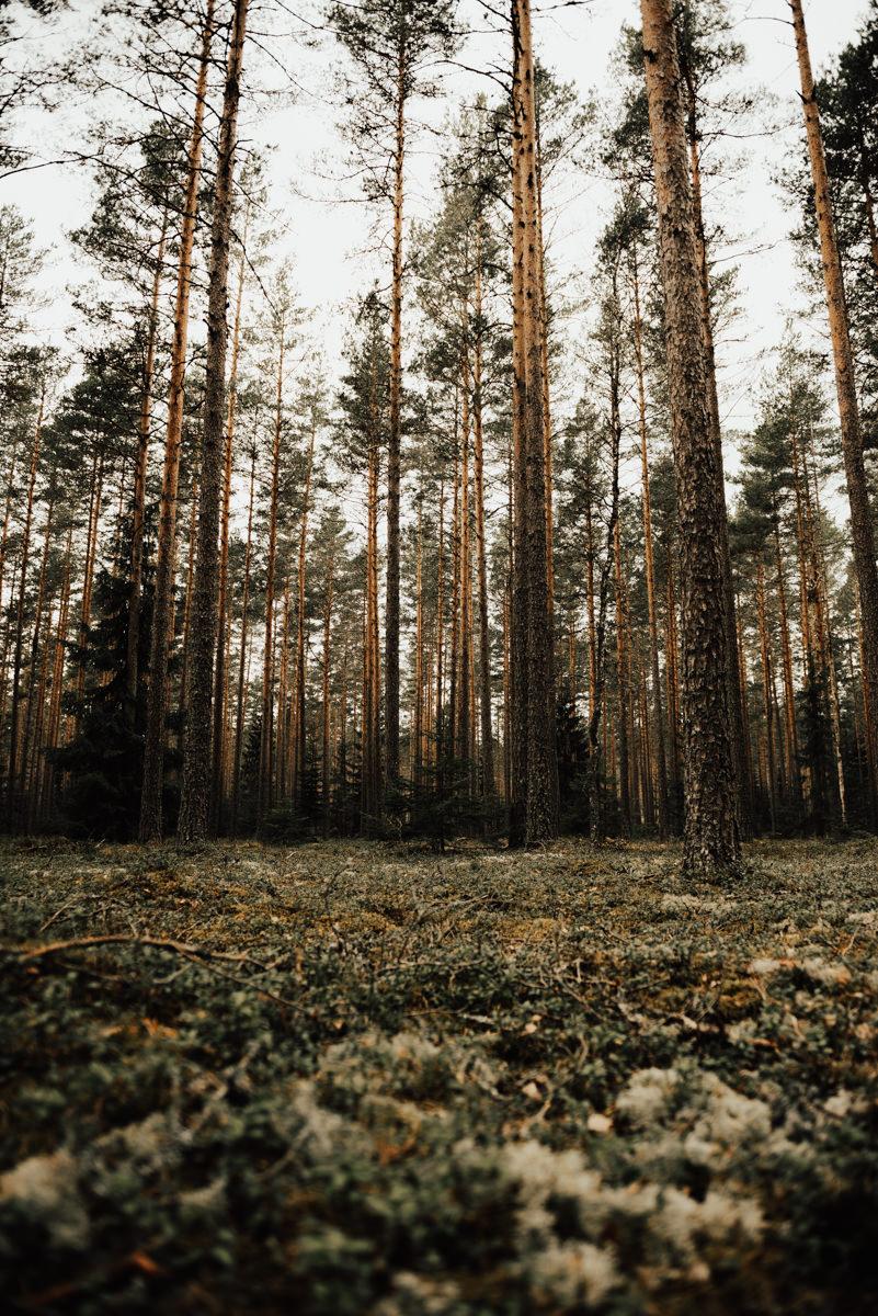 Linnsejphotography-brollopsfotograf-halmstad-vasteras-halland-brollop-brollopsinspo-brudklanning-brollopsfotografering-bohowedding-bohemiskt-lantligt-brollop-0066.jpg