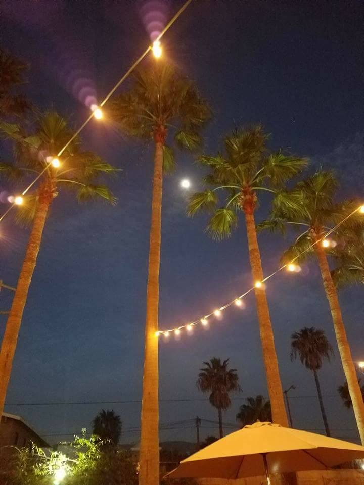 ensanada palm lights.jpg