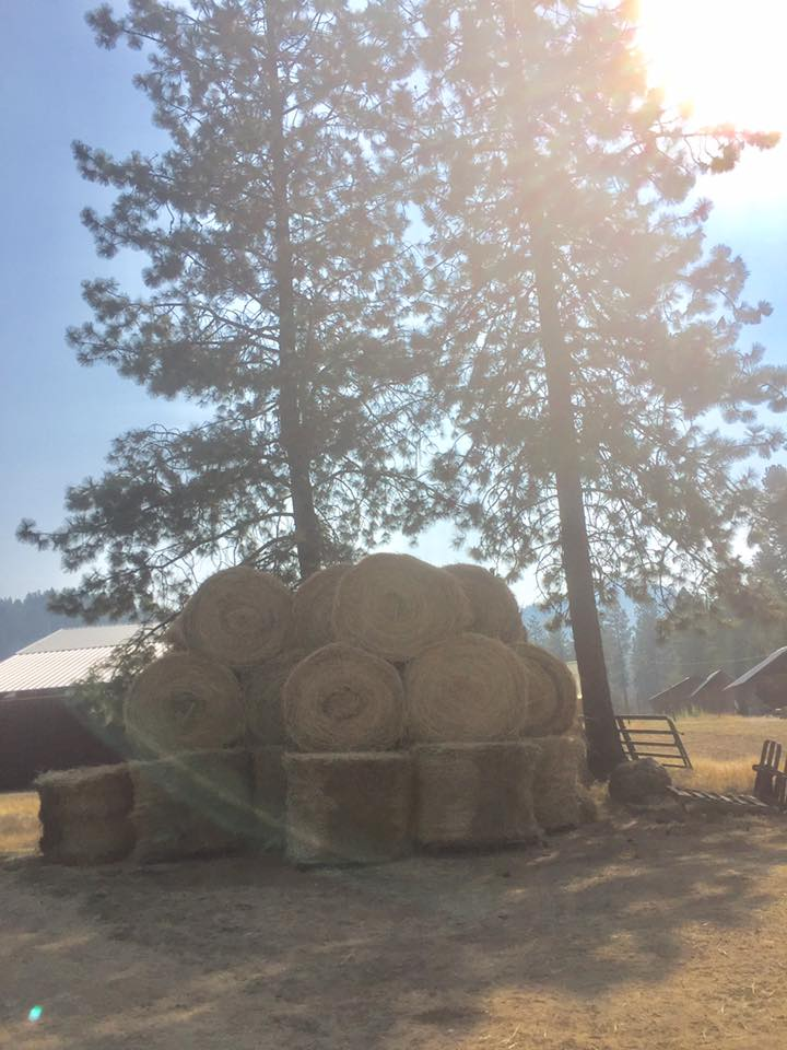 hay bales at the ranch.jpg