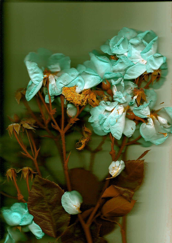 Copy of Florals