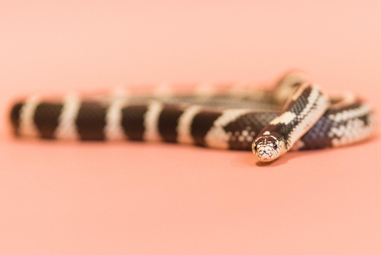 030517 Social Tees Reptiles-14.jpg