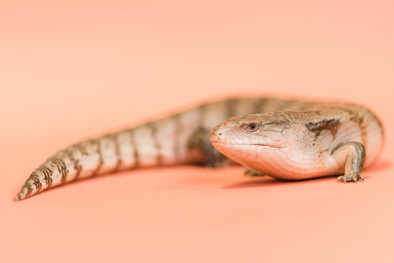 030517 Social Tees Reptiles-32.jpg
