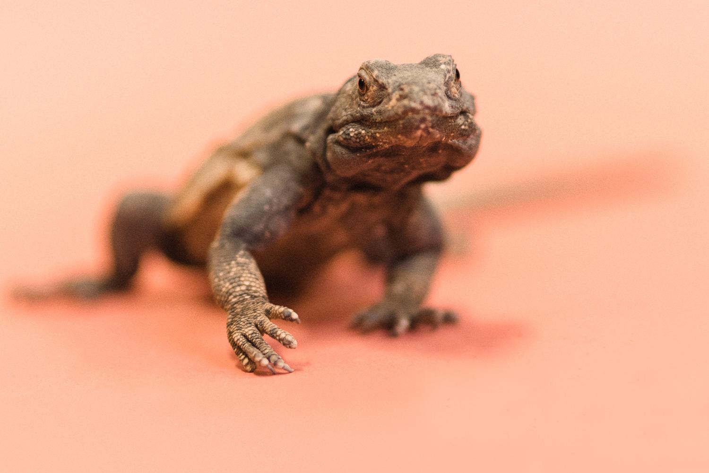 030517 Social Tees Reptiles-37.jpg