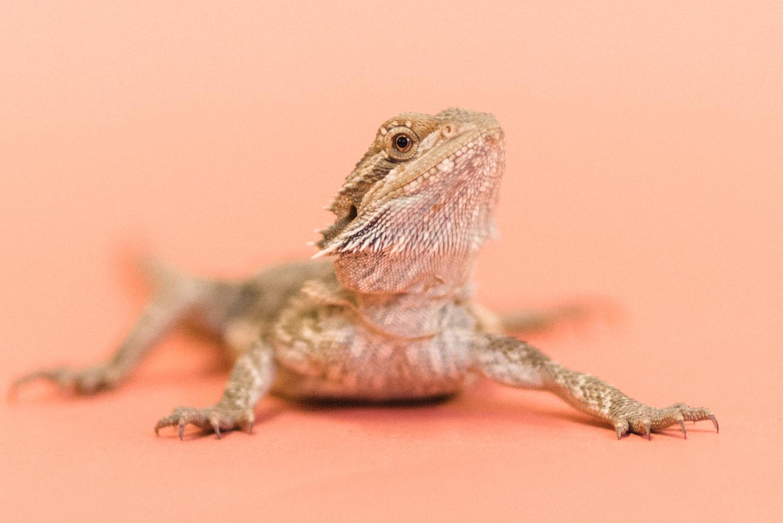 030517 Social Tees Reptiles-39-Edit.jpg