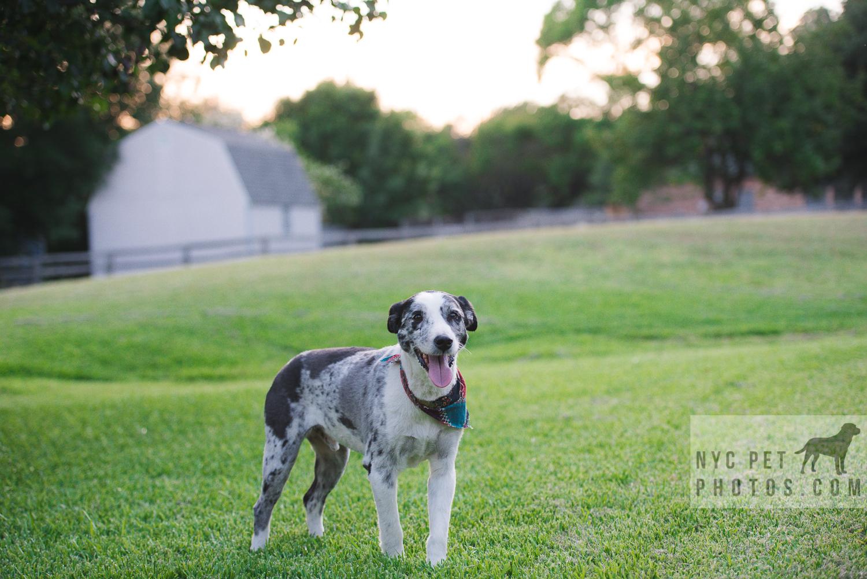 Stray Dog-14.jpg