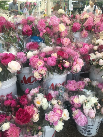 These peonies!!!