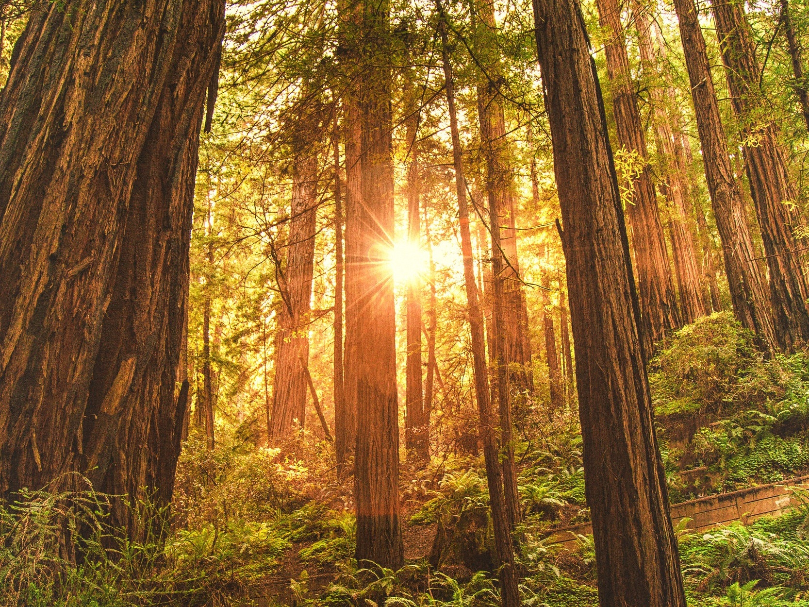 HENRY COWELL REDWOODS STATE PARK - Amazing camping right in Santa Cruz. This state park is only 6 miles from our location. Renters will often stay here the first or the last night of their trip. You can book a site here up to 6 months in advance.