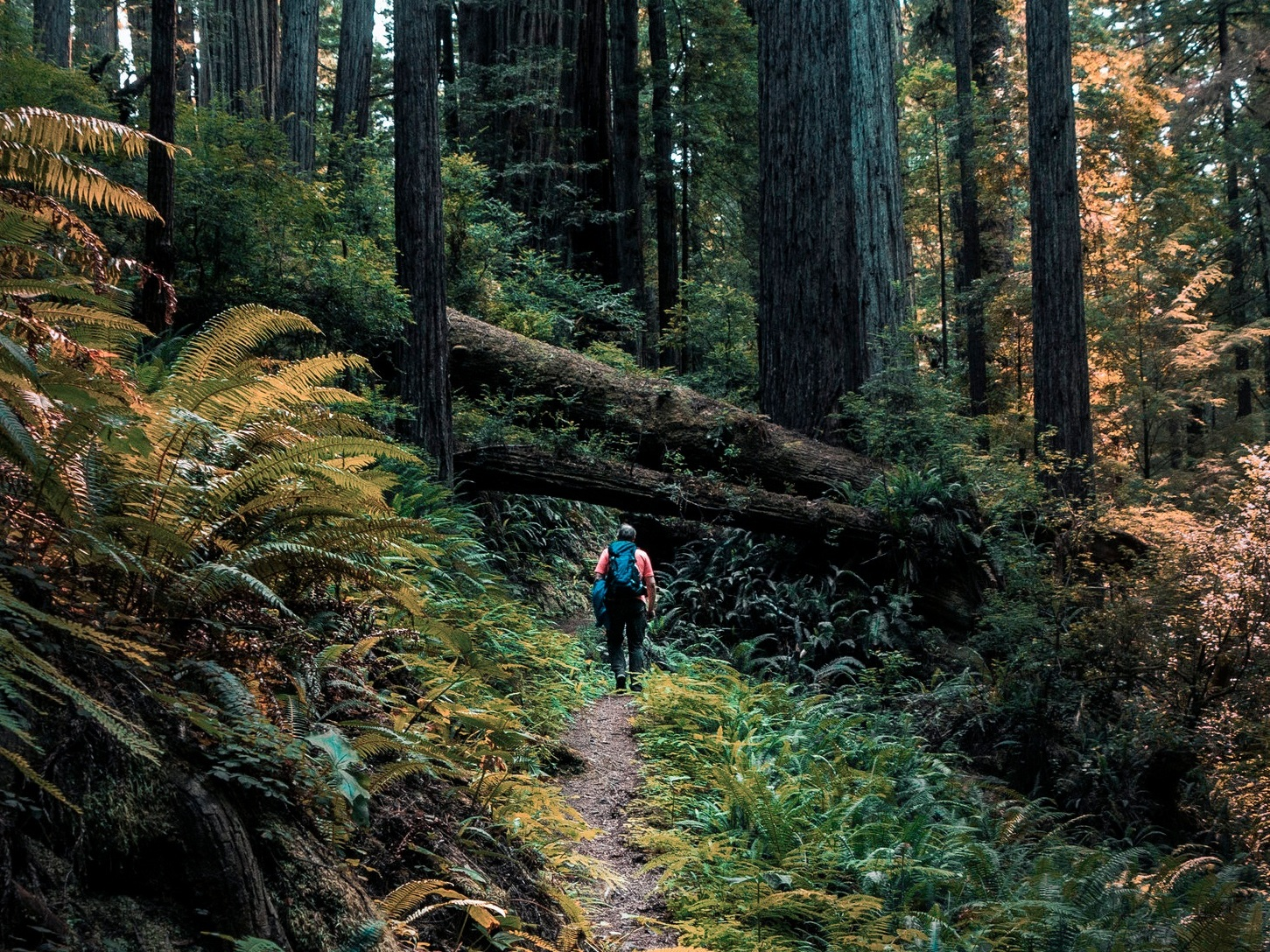 REDWOOD NATIONAL PARK - Most people know Redwood as home to the tallest trees on Earth. The parks also protect vast prairies, oak woodlands, wild riverways, and nearly 40 miles of rugged coastline.