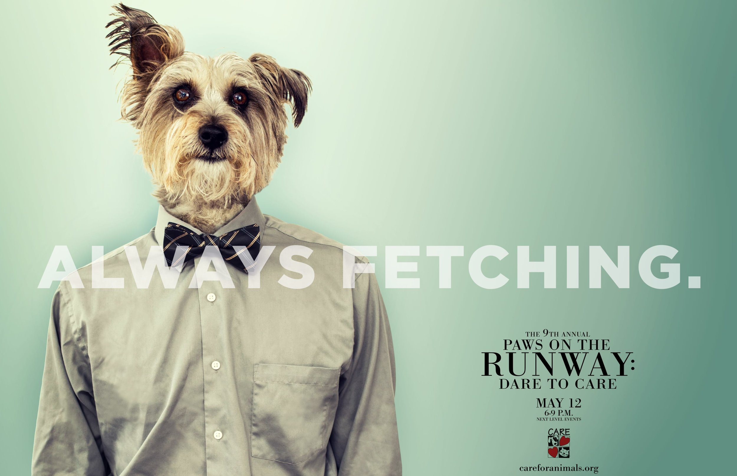 Paws on the Runway BEAR FINAL pdf-1.jpg