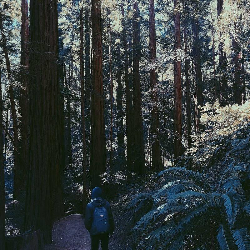 Muir Woods - San Francisco - California