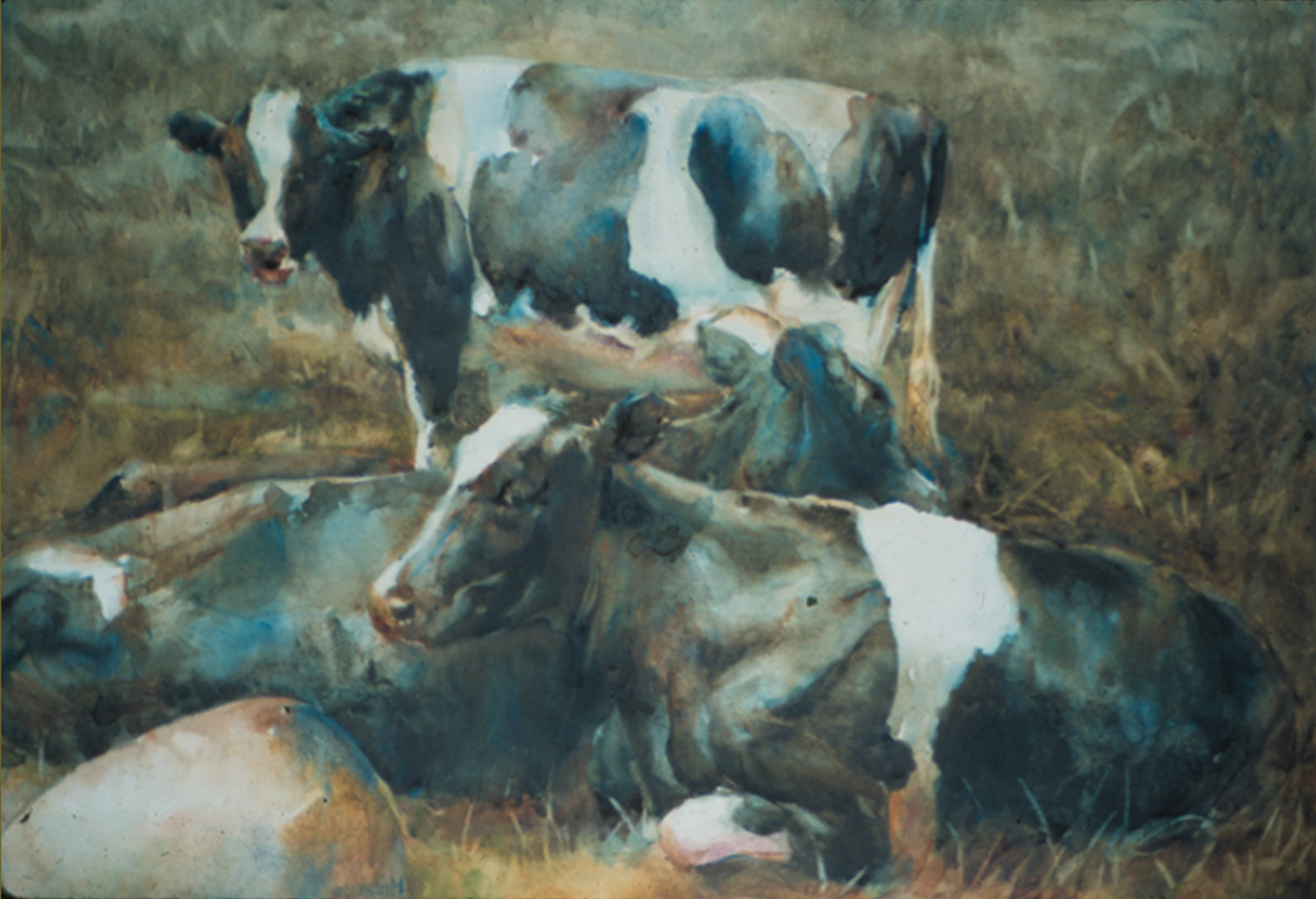 """""""Cows resting"""""""