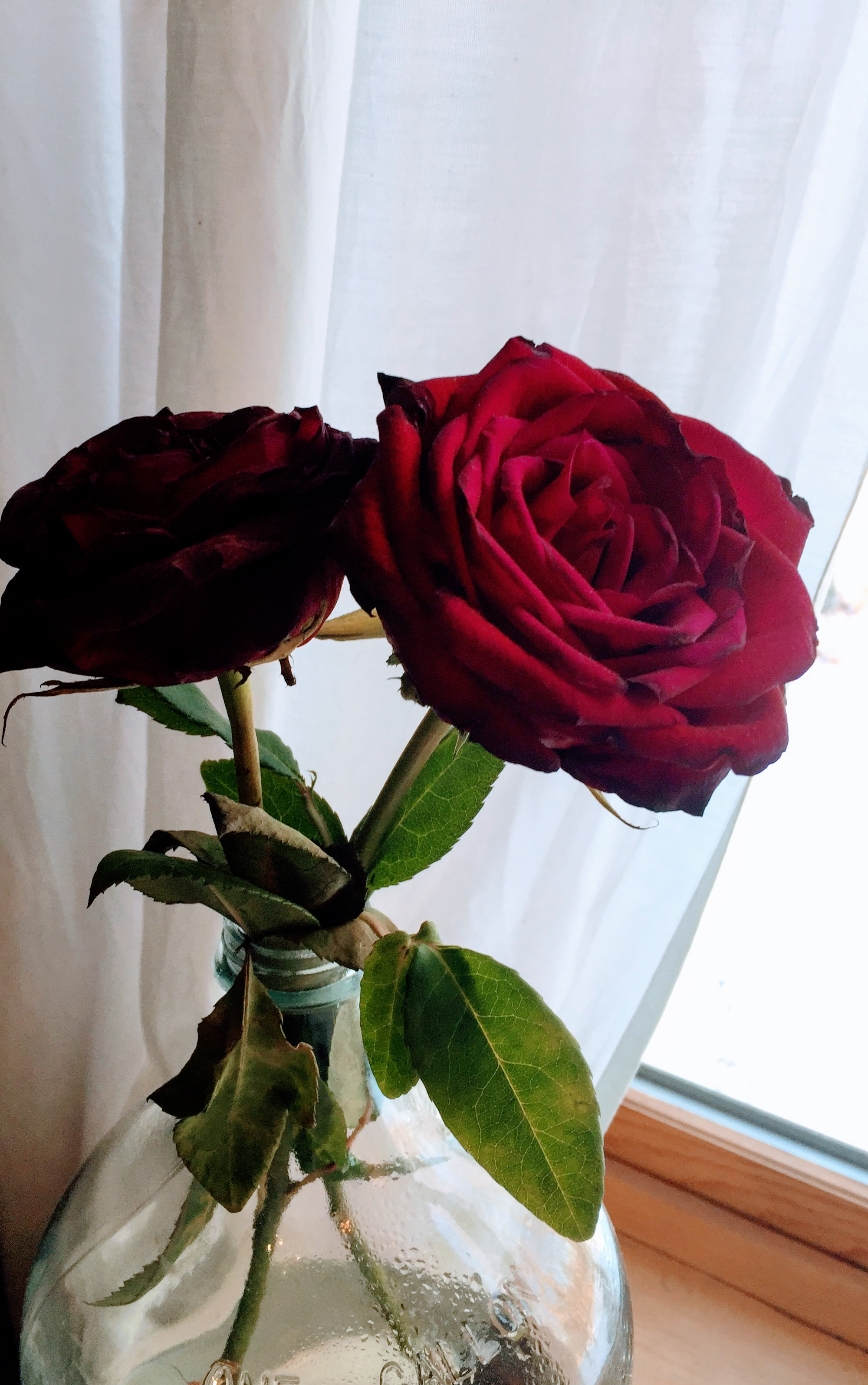 Do you love the fading of roses that probably should be composted? Keep the the beauty that feeds your soul regardless of what others may say. -