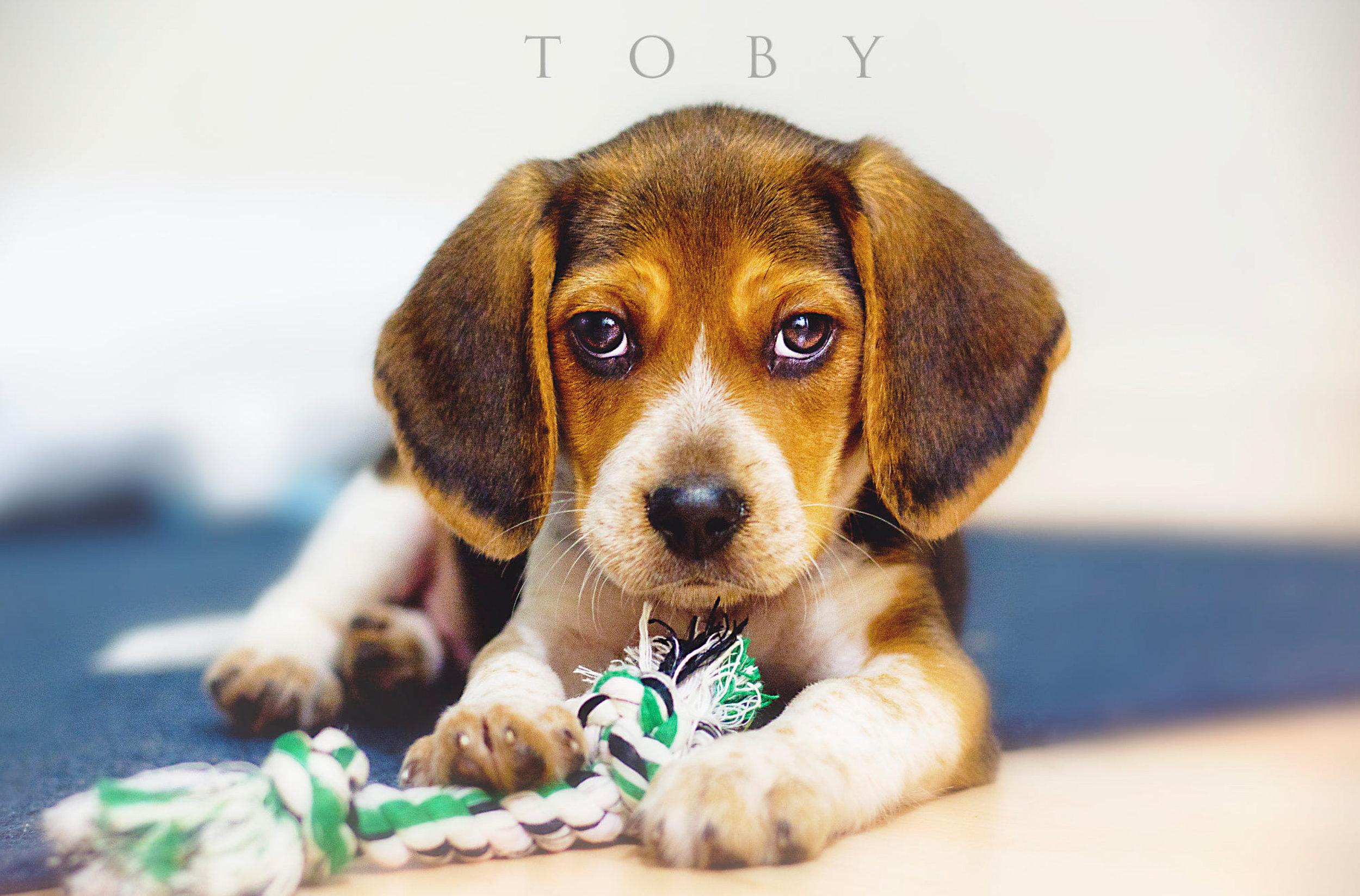 Toby01.jpg