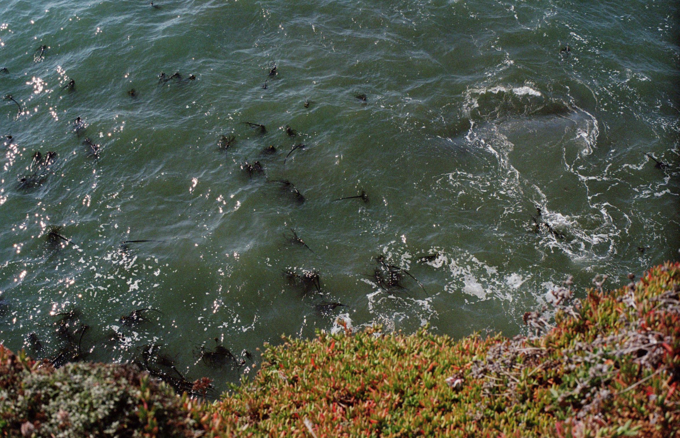 Pacific Ocean wonder