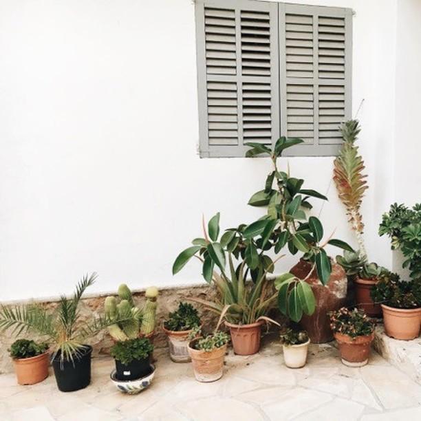 ~ plant life ~