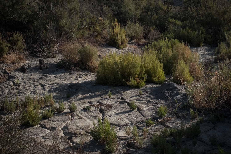 Vegetation due to subterranean water.
