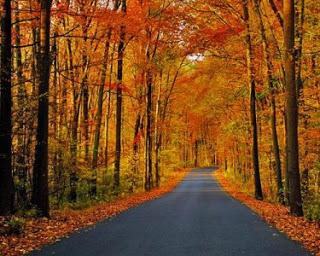 better-fall-path.jpeg