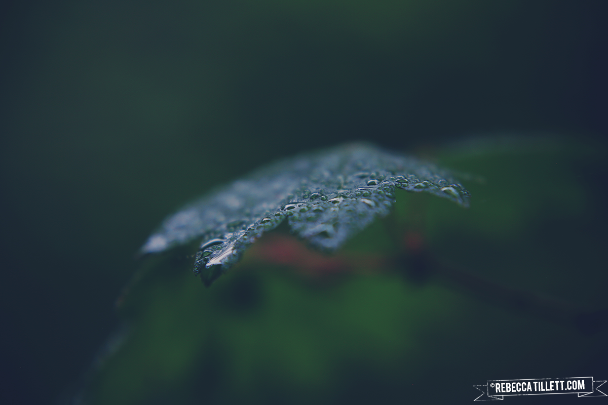 2015_08_30-BLOG.png