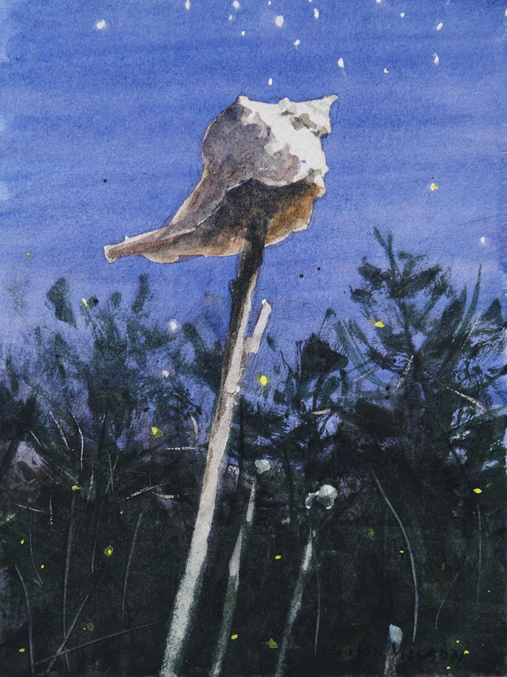 """NIGHT WHELK"" Watercolor"