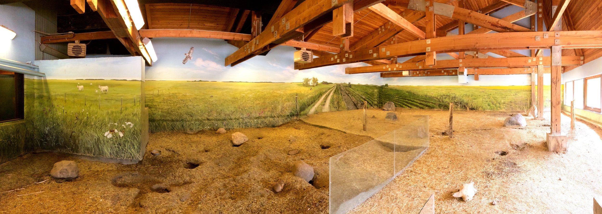 Prairie Dog & Burrowing Owl habitat