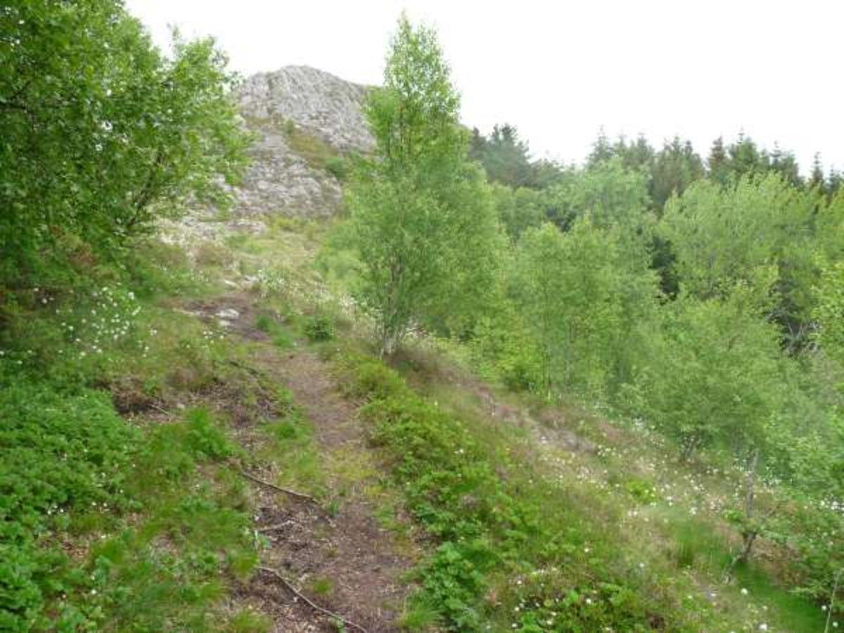 Vegsteinfjellet  (72 moh.) Vanskelighetsgrad: Enkel Tid: ca. 40 min t/r. Startsted: Skilt i veikanten like før bebyggelsen på Vegstein.