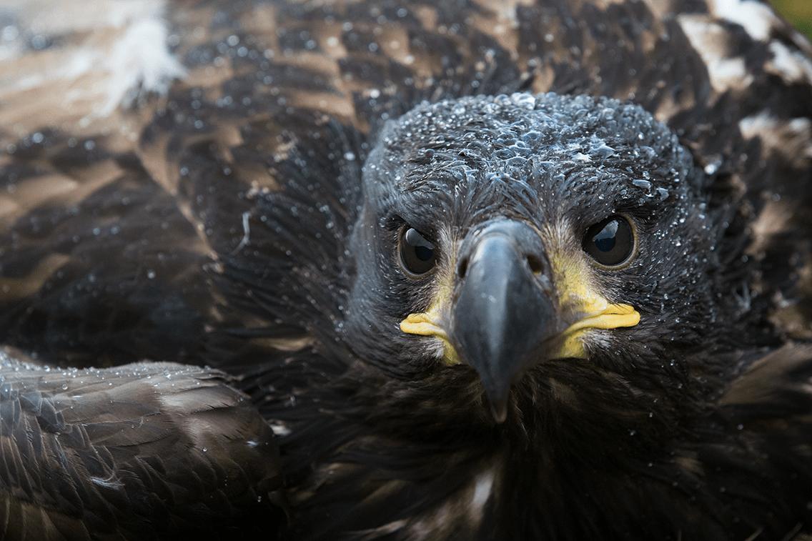 Fugle-kikking -