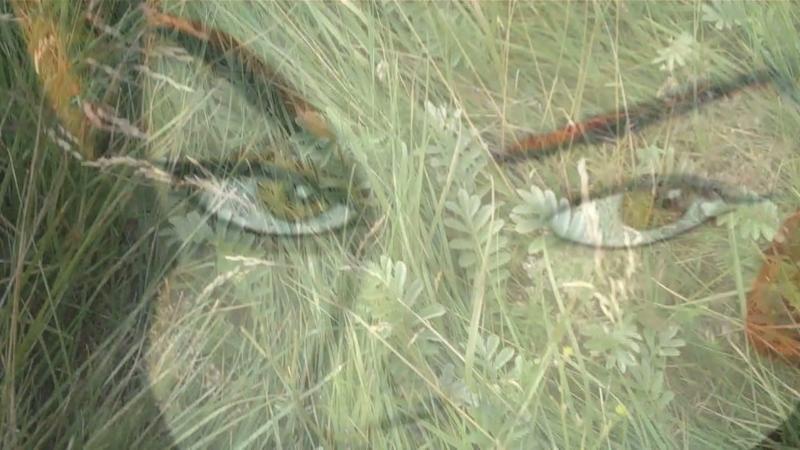 Eyesland -