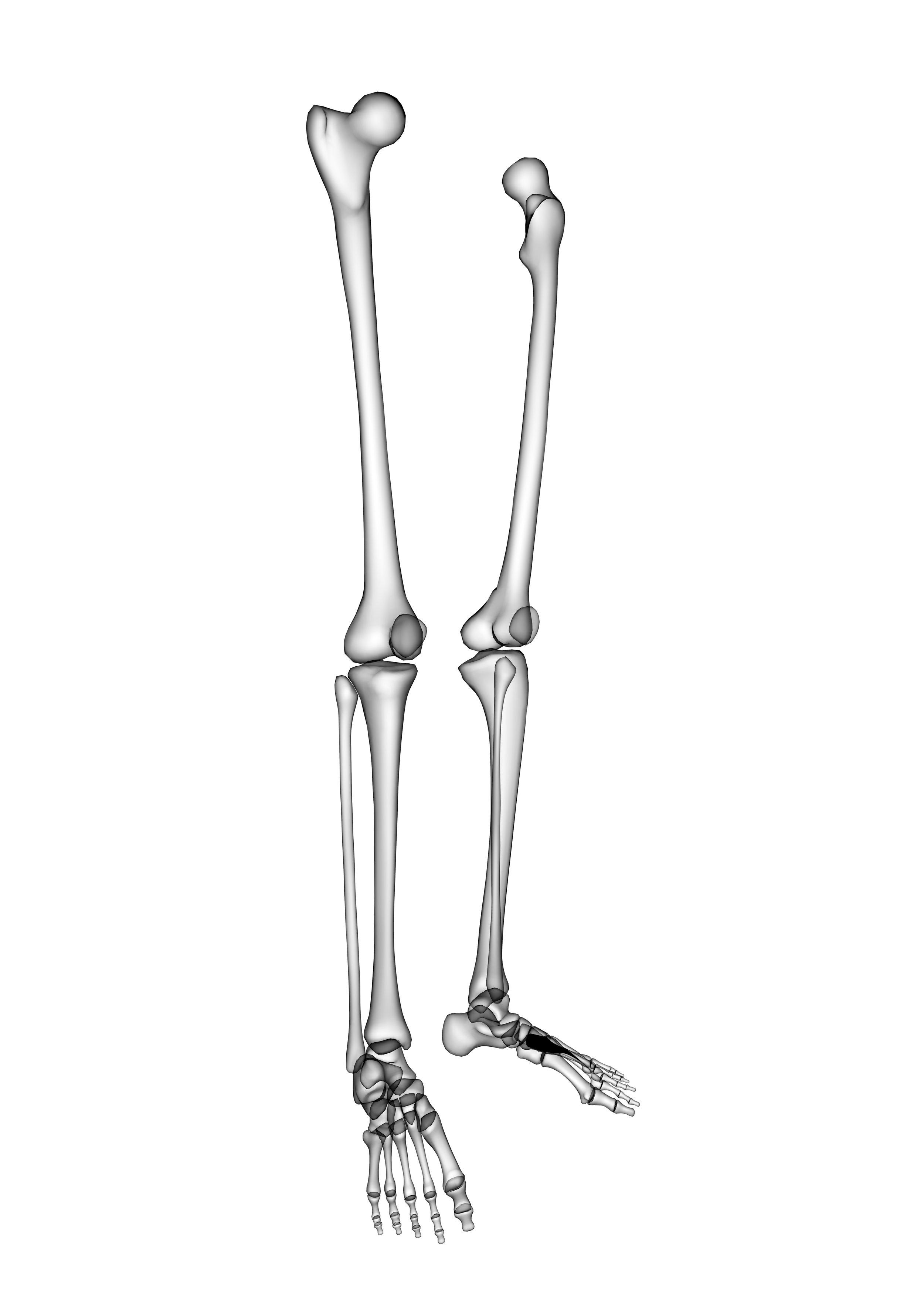 skeletal legs standing up.jpg