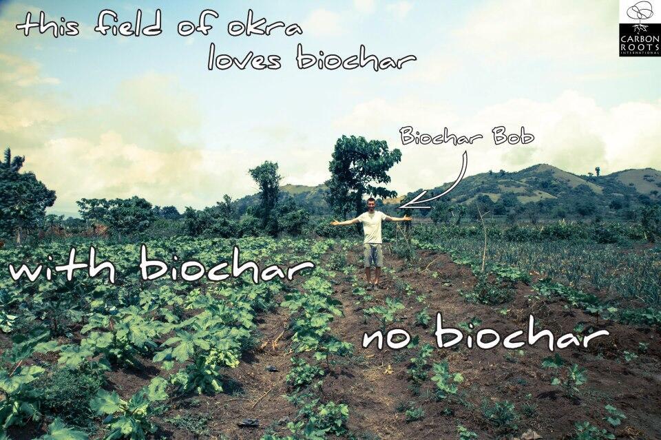 okra:biochar