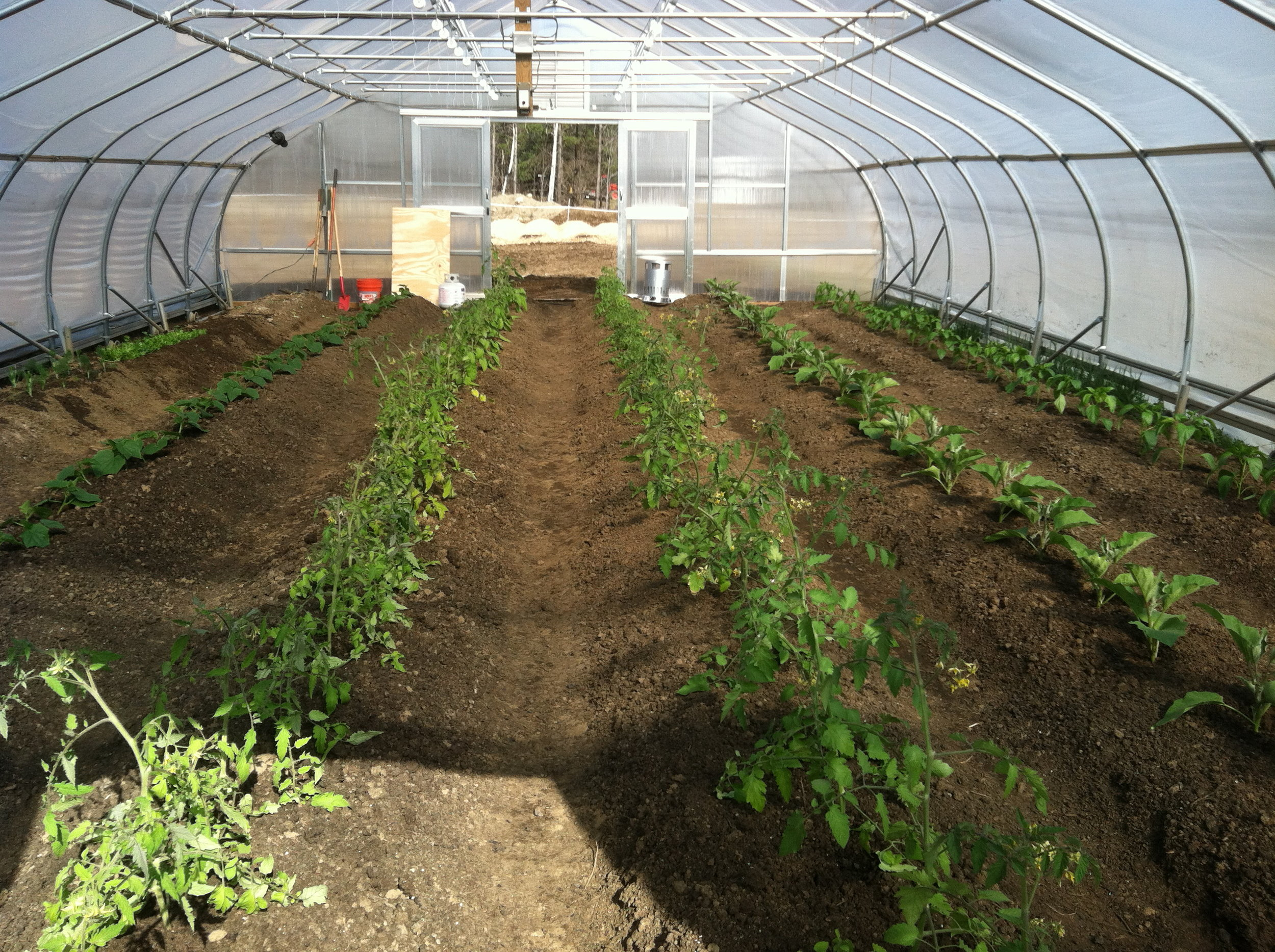 Rolling greenhouse: beds constructed and seedlings transplanted.