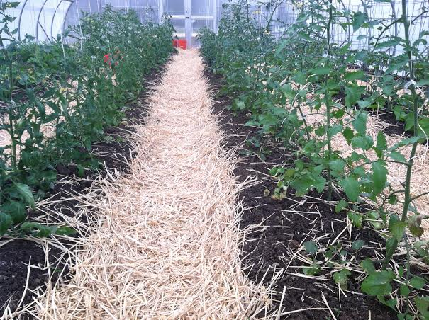 Raised beds in rolling greenhouse already planted.  Built the same way.  With weed-barrier mulch (newspaper and straw) in the aisles.