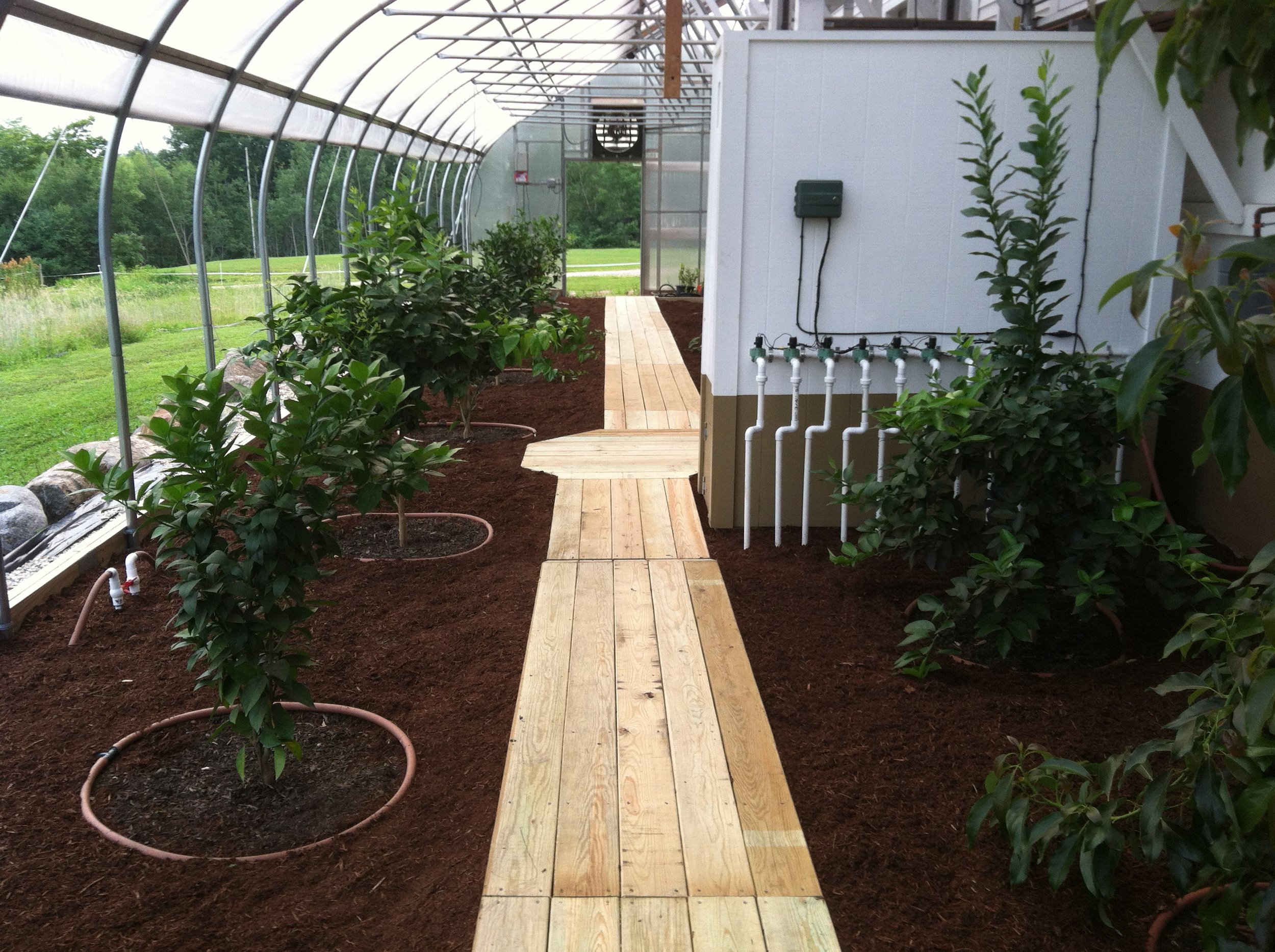 Greenhouse boardwalk and automated irrigation zone system.