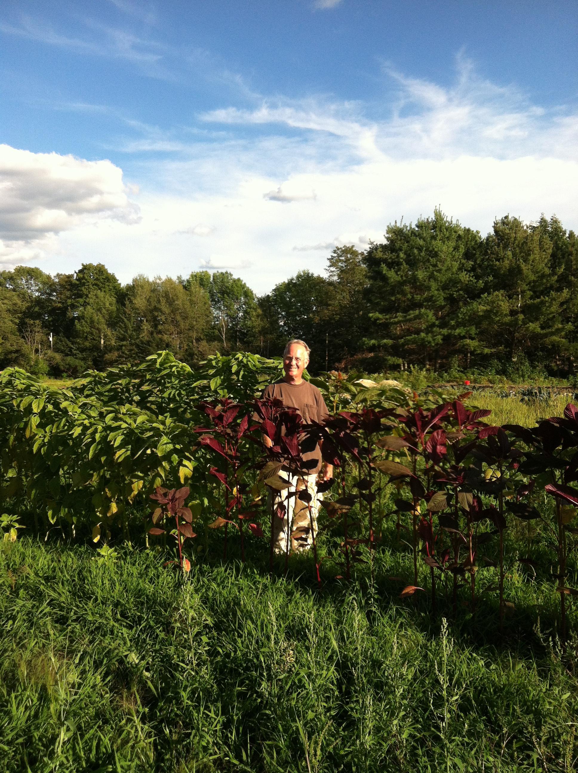 Summer 2012.  Green and burgundy amaranth.