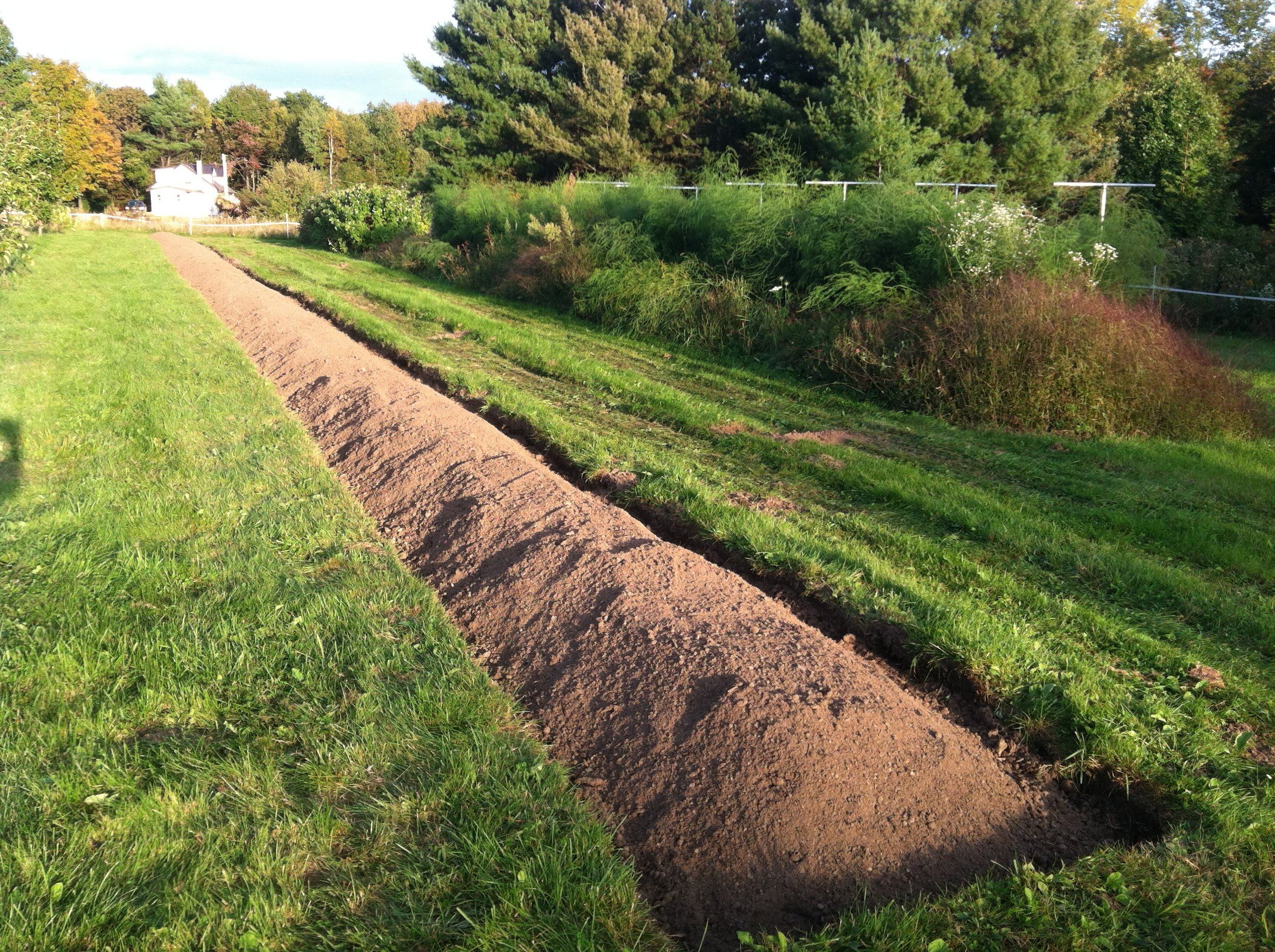 New 150' long bed for strawberry plants.