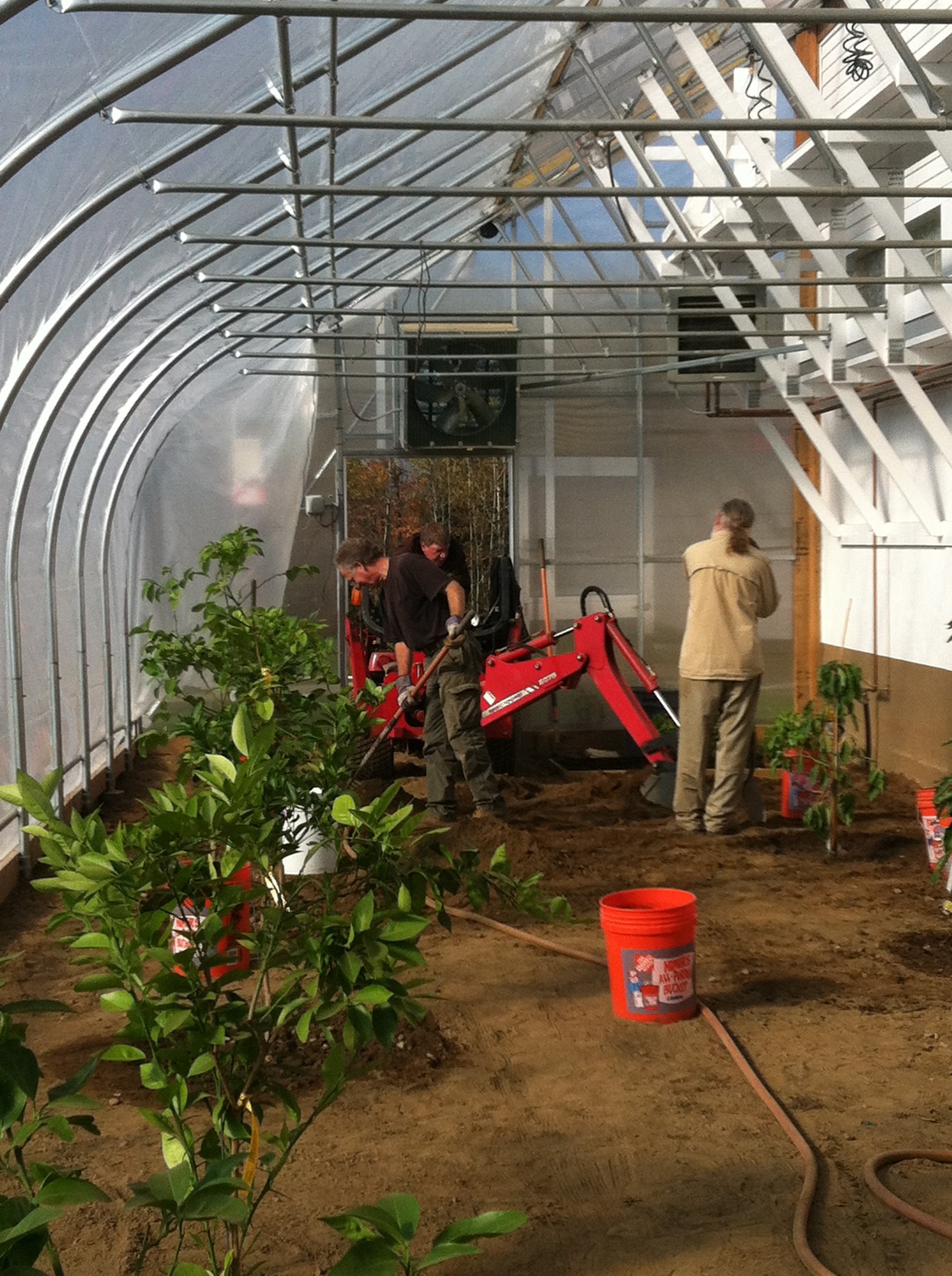 Planting citrus and avocado trees in greenhouse, October 2013. Ron was a master with equipment.