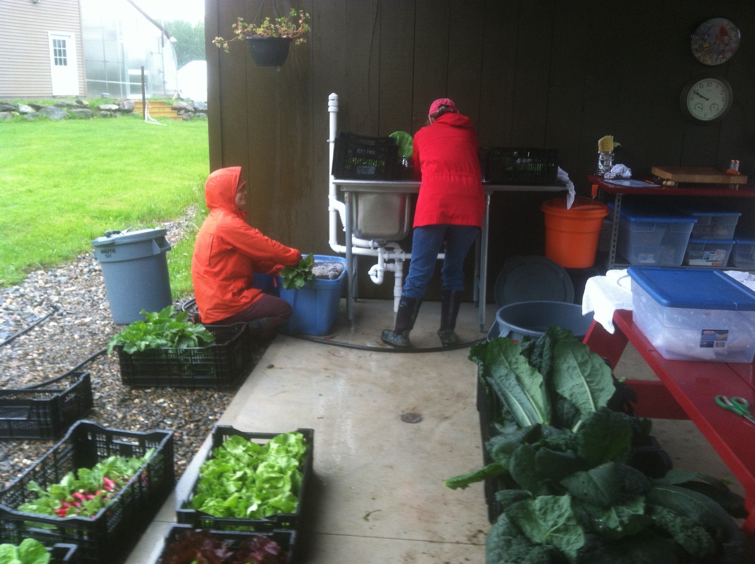 Laurel and Carol cleaning vegetables.