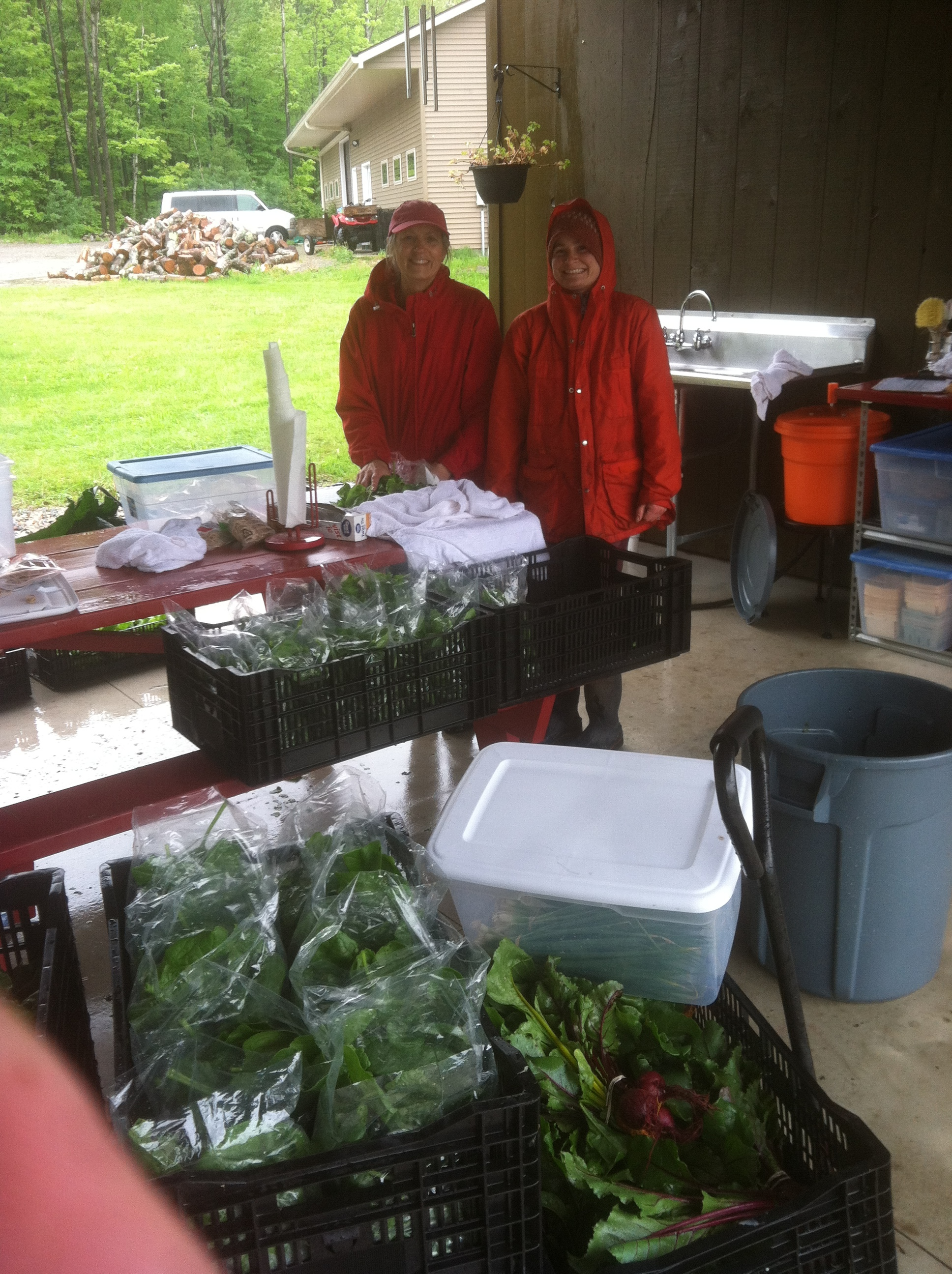Carol and Laurel near the end of the morning's harvest.  Red jackets match their hands, red from the cold.