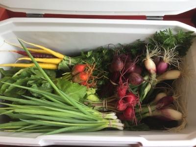 veggies in the cooler - 1.jpg
