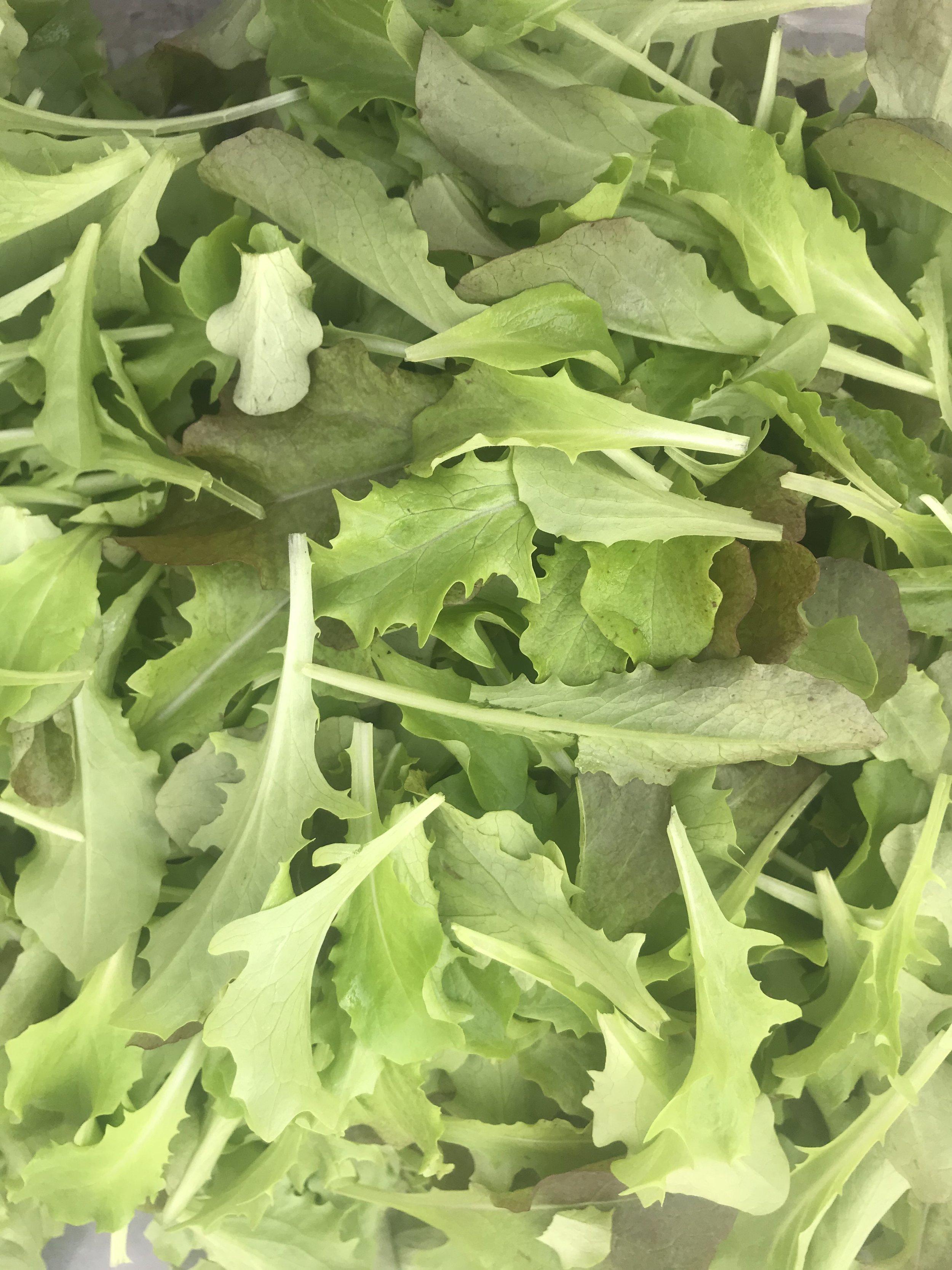 Gorgeous, tender salad greens