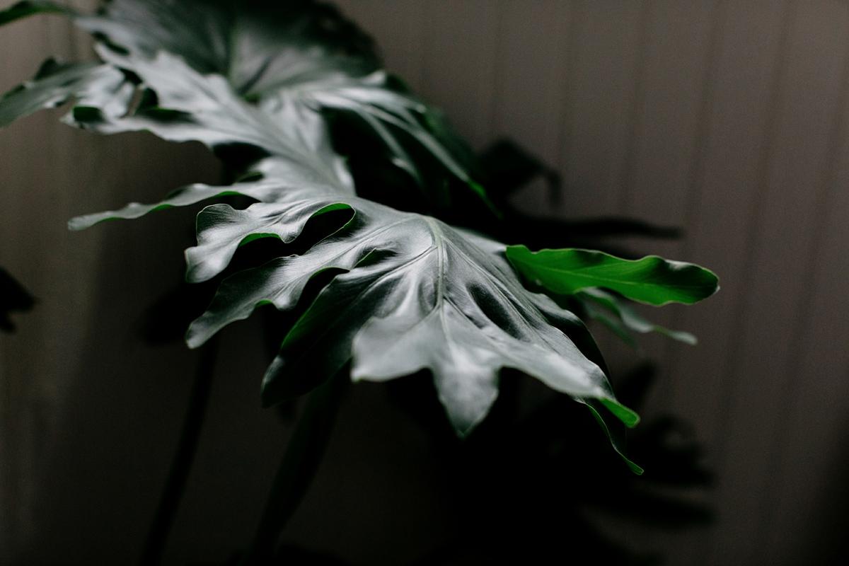 001-plant--plant-addict--blogger--interior-blogger--interio--home-blogger--lifestyle--lifestlye-blogger--tropical--urban-jungle.jpg