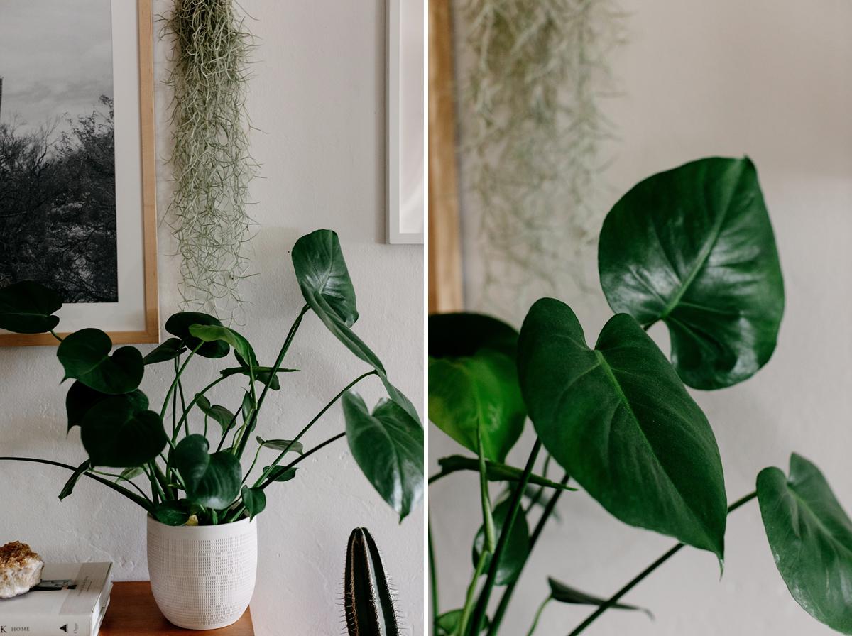 002-plant--plant-addict--blogger--interior-blogger--interio--home-blogger--lifestyle--lifestlye-blogger--tropical--urban-jungle.jpg