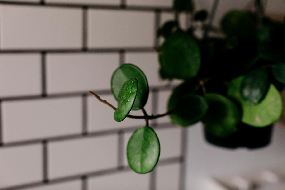 009-plant--plant-addict--blogger--interior-blogger--interio--home-blogger--lifestyle--lifestlye-blogger--tropical--urban-jungle.jpg