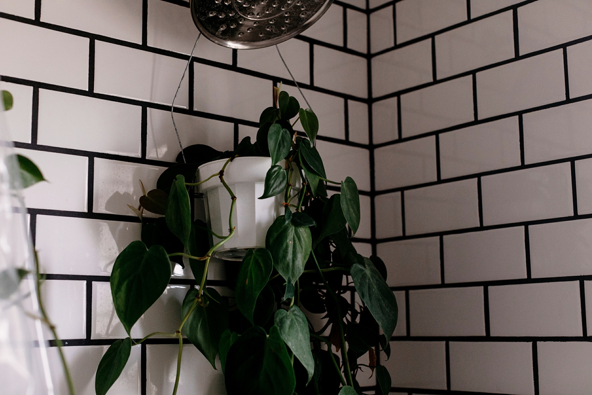 010-plant--plant-addict--blogger--interior-blogger--interio--home-blogger--lifestyle--lifestlye-blogger--tropical--urban-jungle.jpg