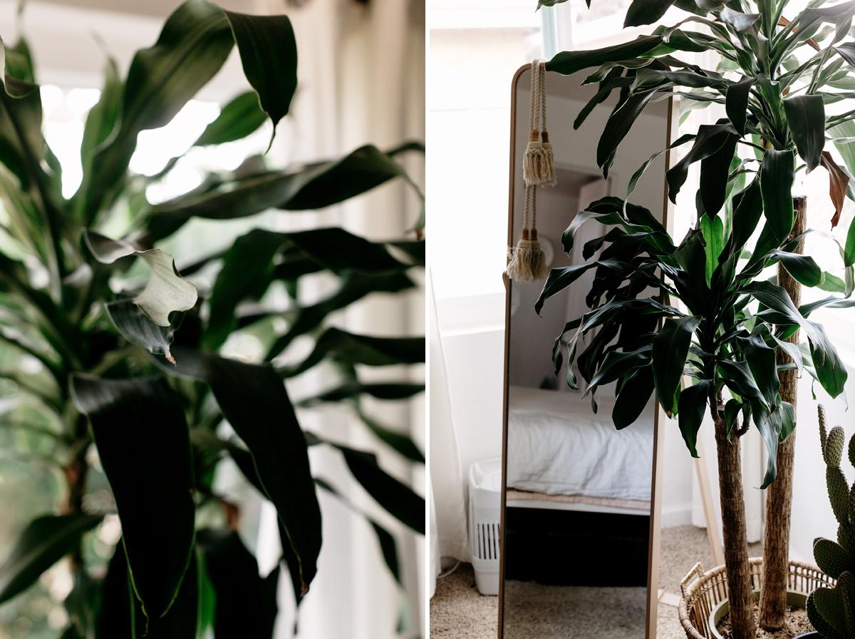 011-plant--plant-addict--blogger--interior-blogger--interio--home-blogger--lifestyle--lifestlye-blogger--tropical--urban-jungle.jpg